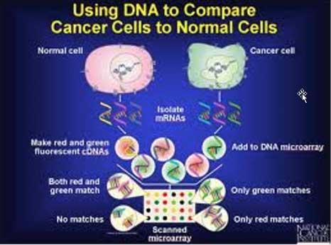 إعادة برمجة الأورام إلى خلايا صحية
