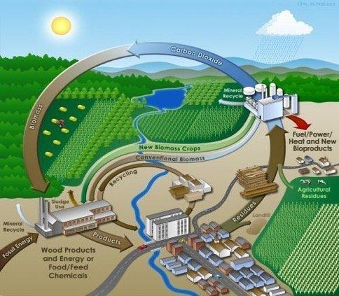الطاقة الحيوية