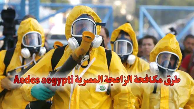 طرق مكافحة الزاعجة المصرية Aedes aegypti