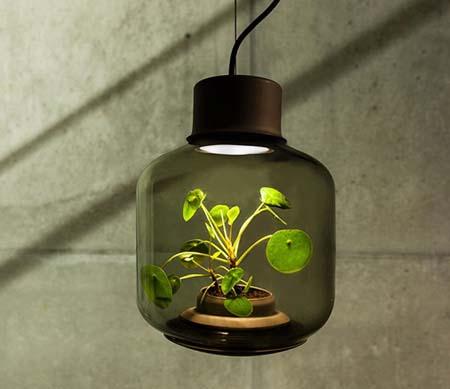 مصابيح تنمو بداخلها النباتات بلا ماء أو شمس!