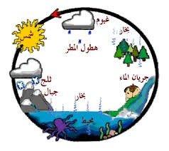 الماء ومعجزة البقاء