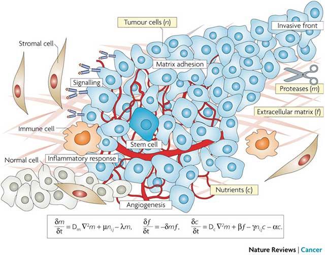 النمذجة الرياضية والسرطان